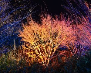 <b>Winter lights, enchanted Forest</b><br>Selection of 14 items