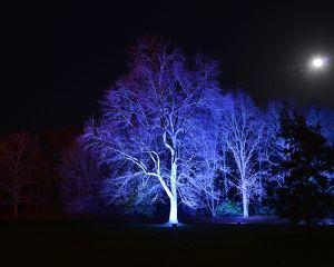 CJ5 6742 Blue trees under the moon